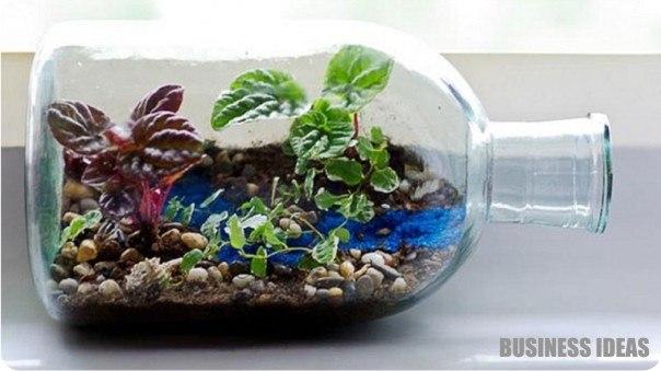 Бизнес выращивание в аквариуме 703